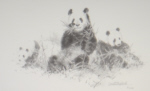 david shepherd,pandas pencil drawing, pandas,2001, print