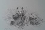 david shepherd pandas prints