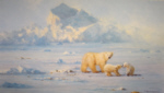 davidshepherd-polarbearcountry