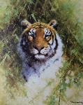 david shepherd portrait of a tiger silkscreen print