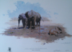 david shepherd Nile Cabbage sappi collection elephants print
