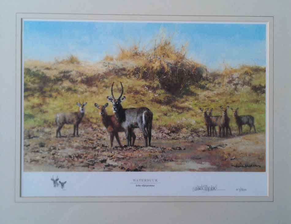 david shepherd, sappi, water buck, signed limited edition print