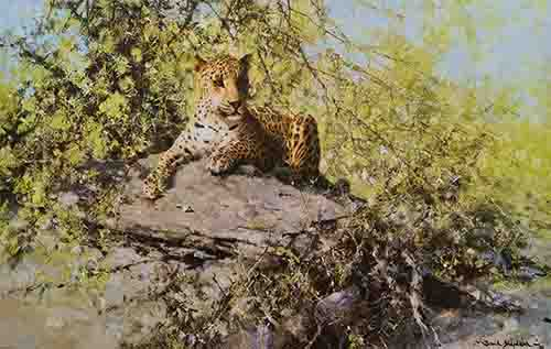 david shepherd leopards prints