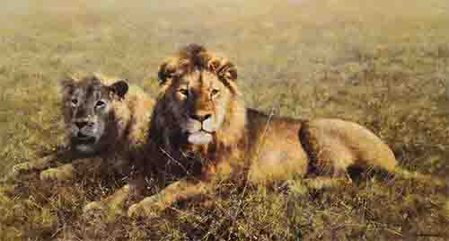 davidshepherd signed limited edition print serengeti friends