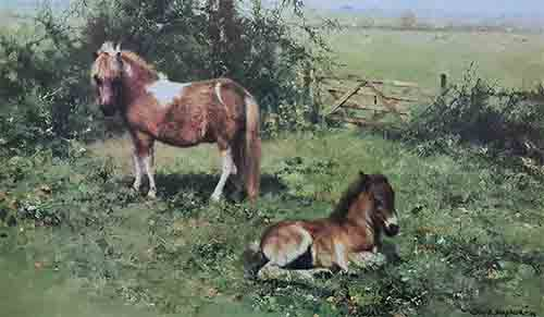 david shepherd, shelties, horses, print
