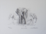 david shepherd Dusty evening sketch elephants, signed, limited edition, print