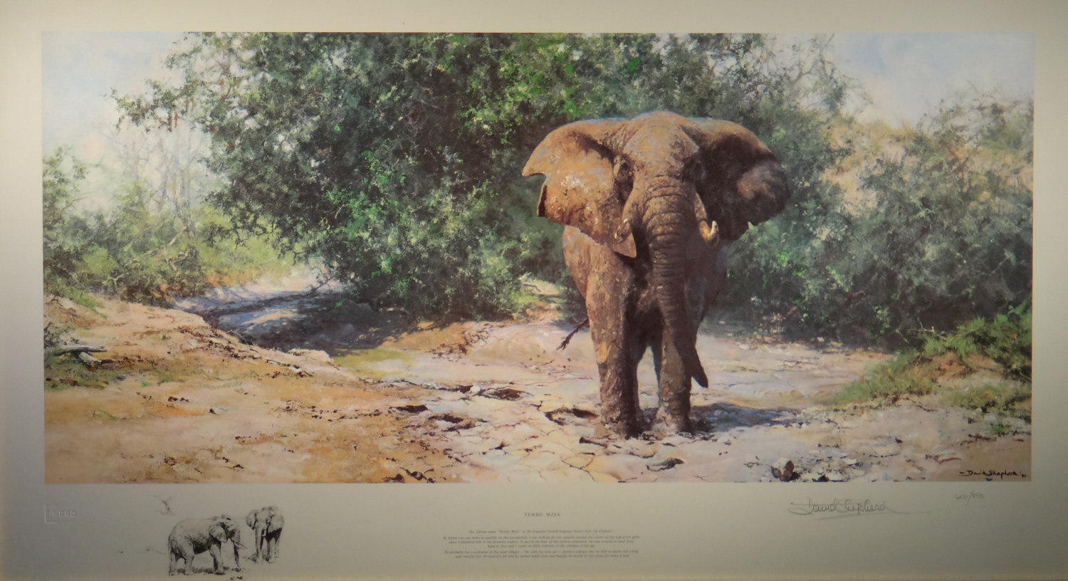 david shepherd signed limited edition print Tembo Mzee elephant