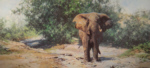 david shepherd Tembo Mzee elephants print