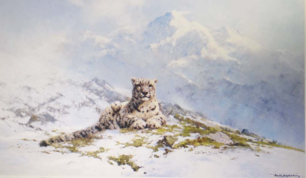 david shepherd snow leopard, print