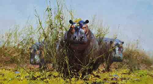 david shepherd hippos prints