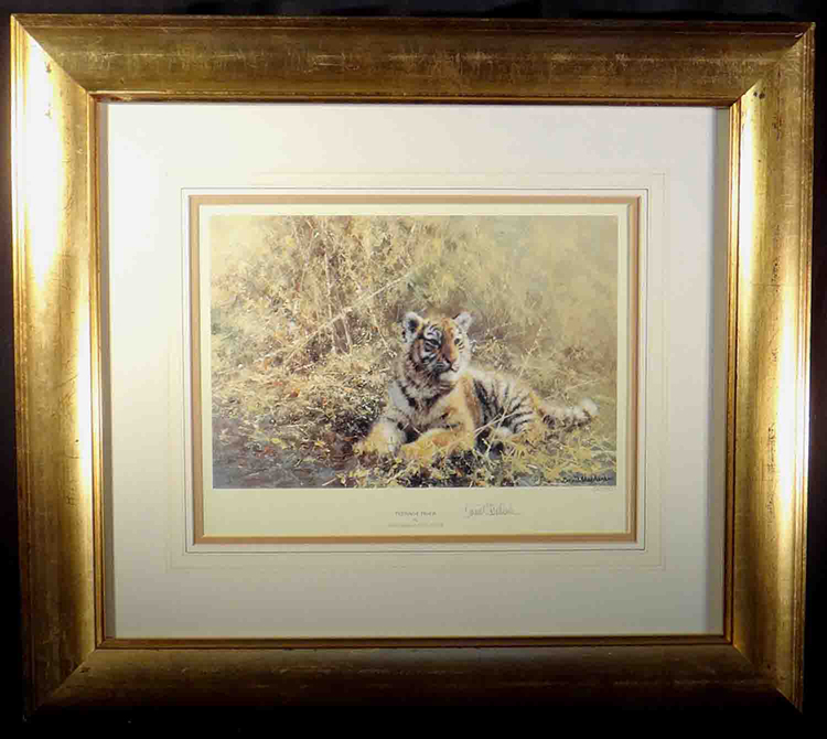 david shepherd, teenage tiger, tiger, signed limited edition print