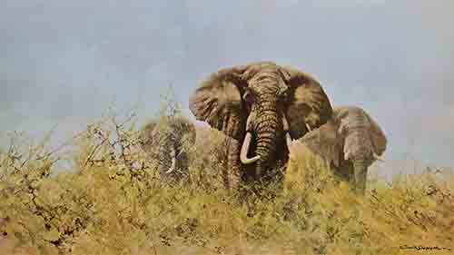 david shepherd three happy jumboselephants print