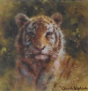 david shepherd tiger cub cameo print