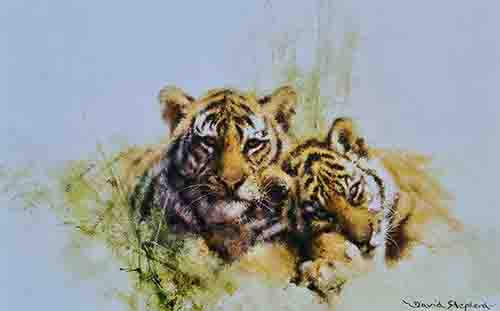 david shepherd tiger cubs
