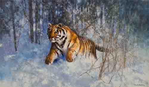 david shepherd tiger in the snow
