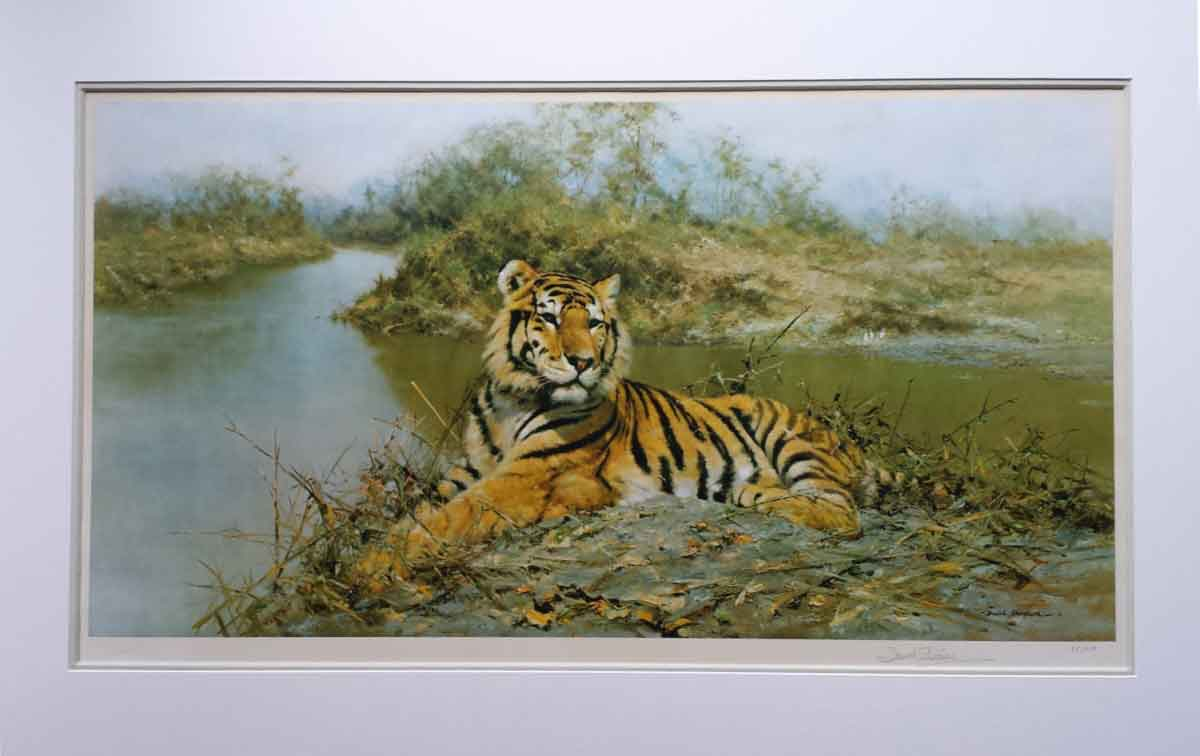 tiger in the sun print mounted