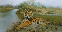 david shepherd tiger in the sun print