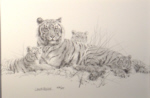 david shepherd, drawing, signed, tigers, sketch, print
