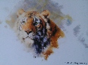 david shepherd tiger's head 1983 print