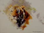 david shepherd tiger head 1983 print