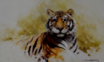 david shepherd tiger sketch 1986 print