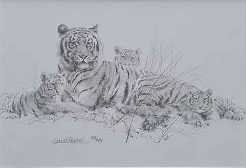 david shepherd tiger sketch print