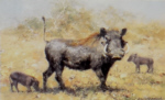 david shepherd warthogs prints
