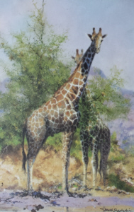 david shepherd watehole trilogy giraffes print