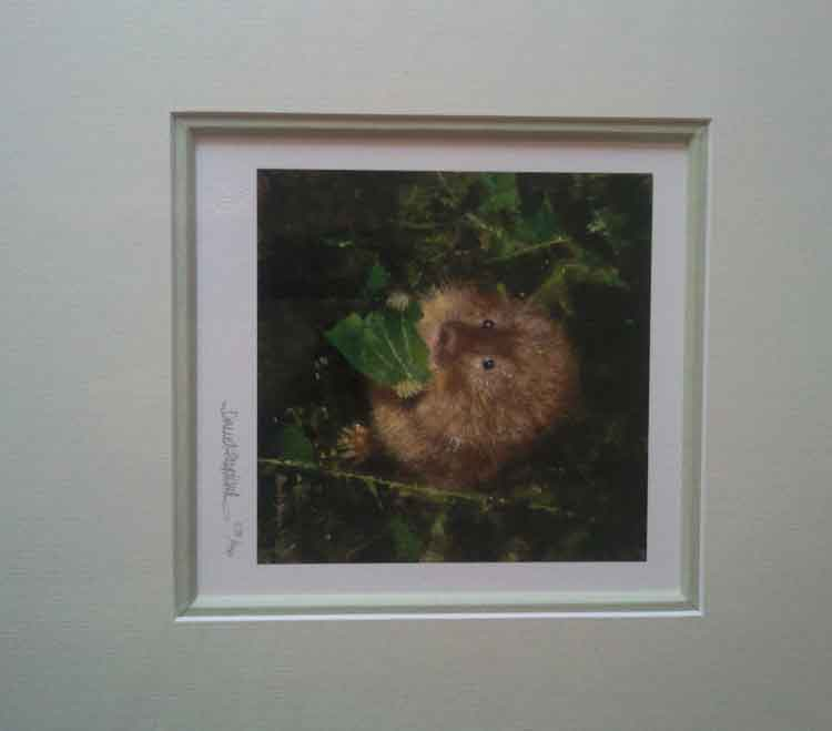shepherd print water vole mounted