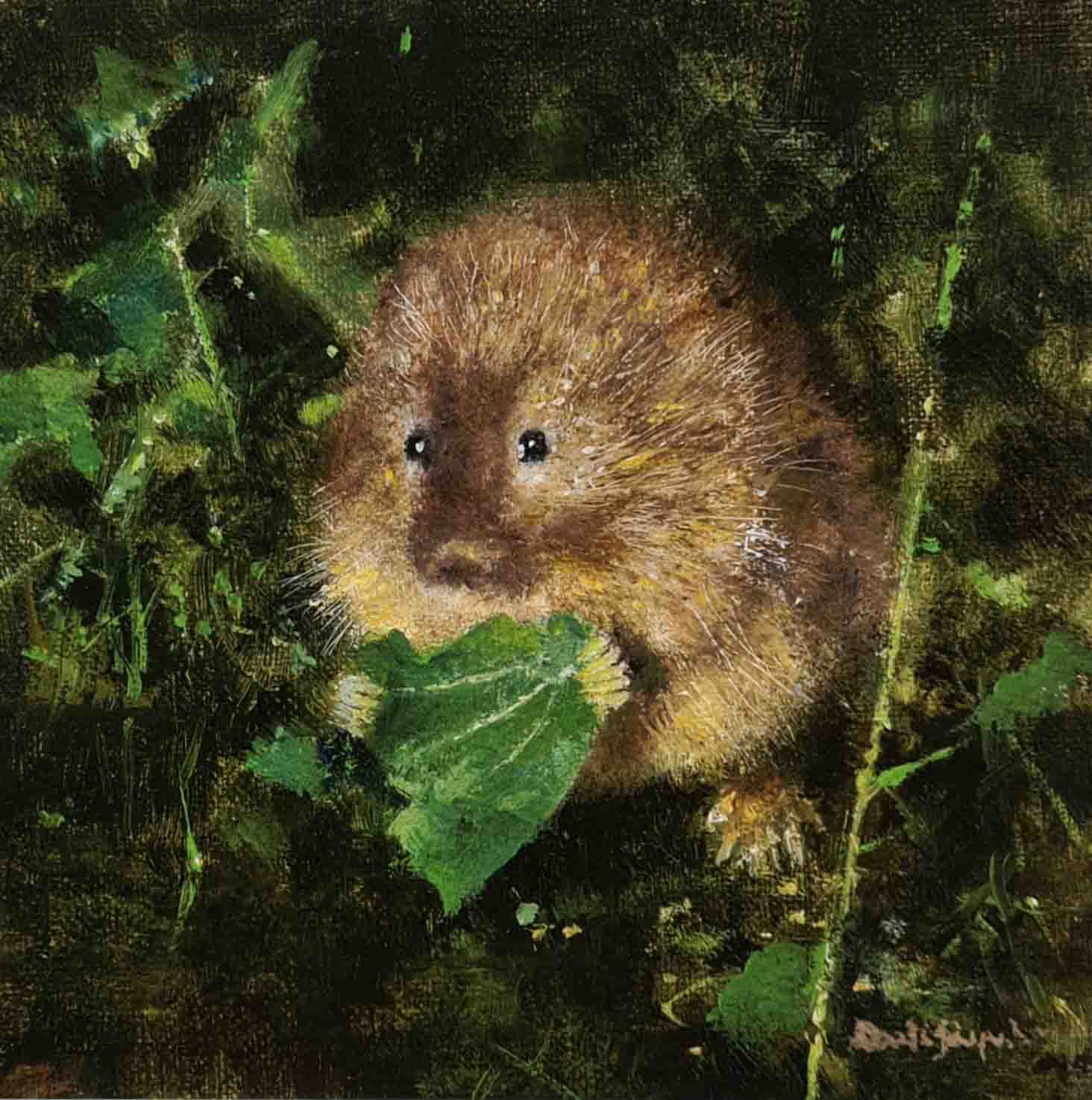 david shepherd water vole print
