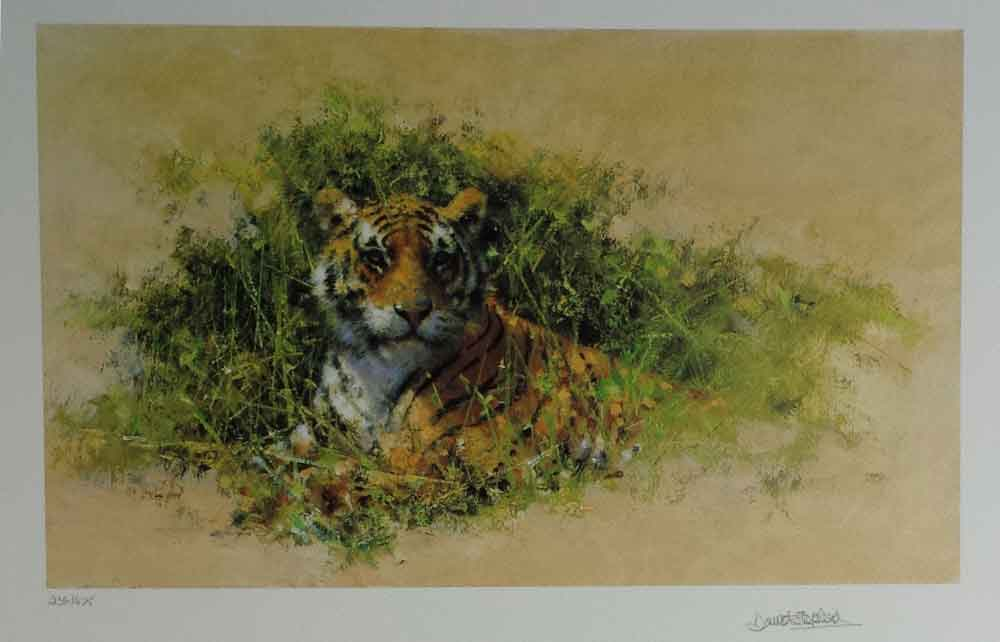 david shepherd wildlife of the world Bengal Tiger, portfolio