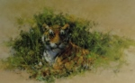 david shepherd Bengal Tiger print