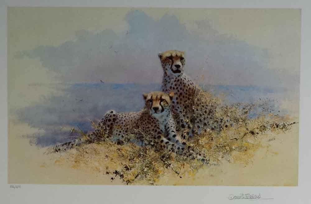 david shepherd wildlife of the world Cheetah, portfolio
