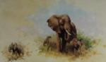 david shepherd elephant and babies prints