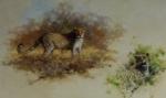 david shepherd Leopards print