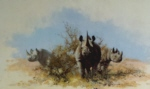 david shepherd Rhino print