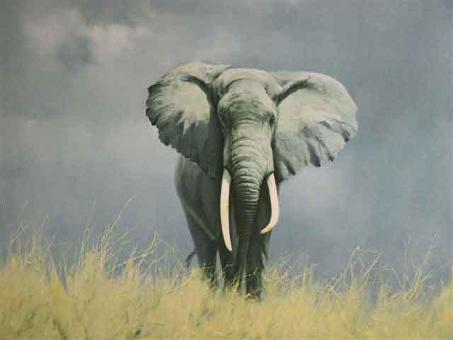 david shepherd  wise old elephant print