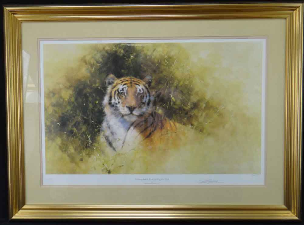 davidshepherd working sketch for the painting of a tiger framed