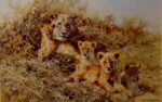 david shepherd young africa print