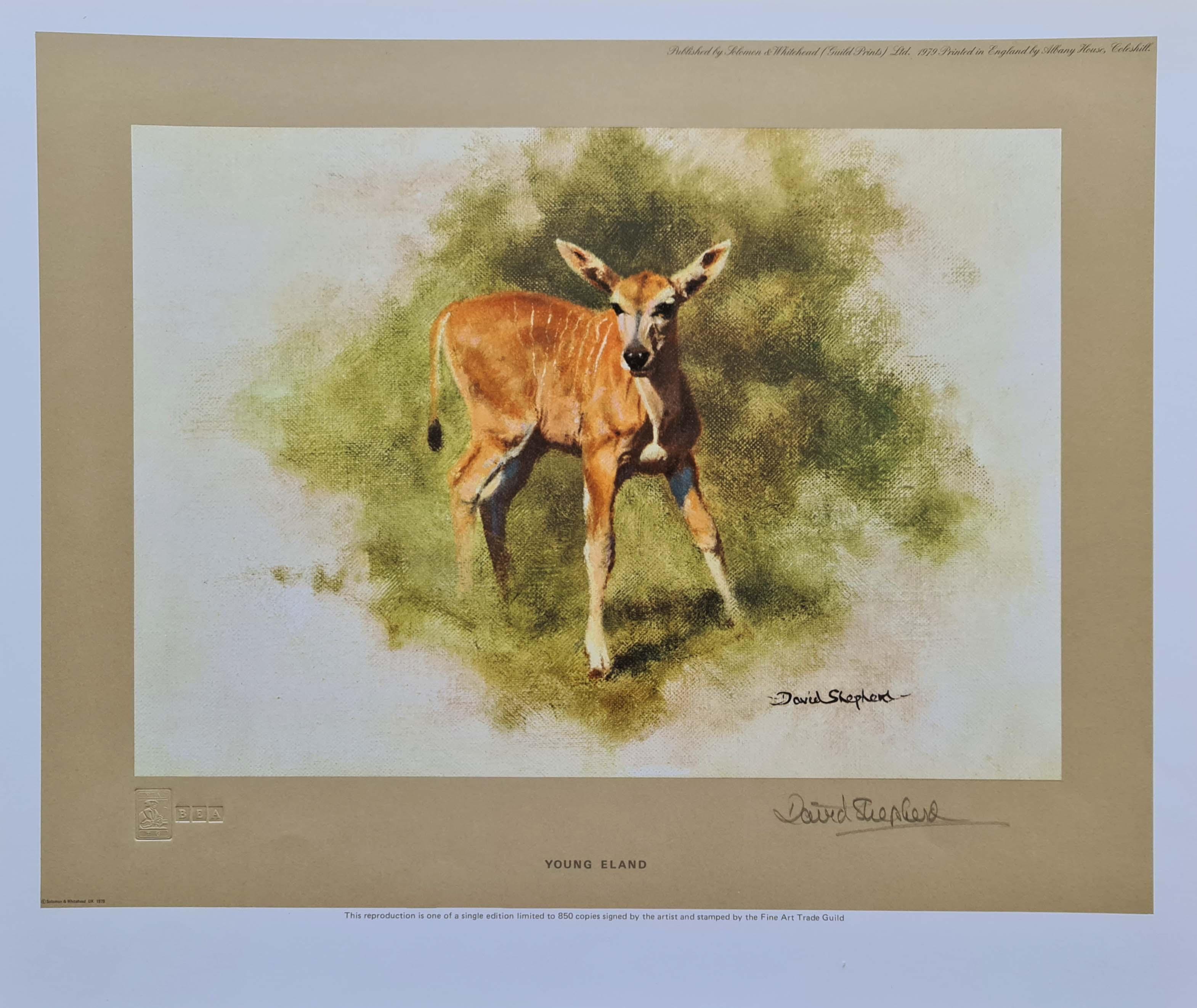 david shepherd, young eland