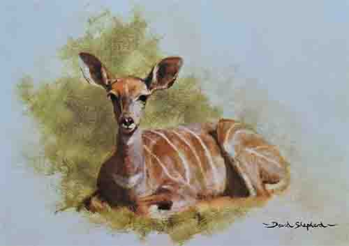 david shepherd young kudu print