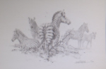 david shepherd zebra pencil drawing