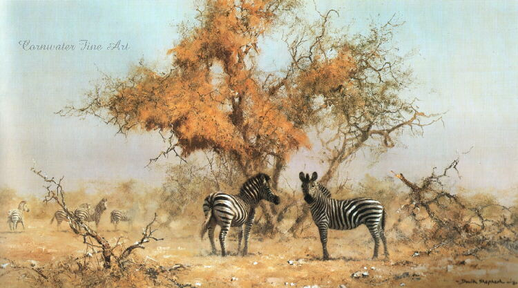 david shepherd zebras and colony weavers print