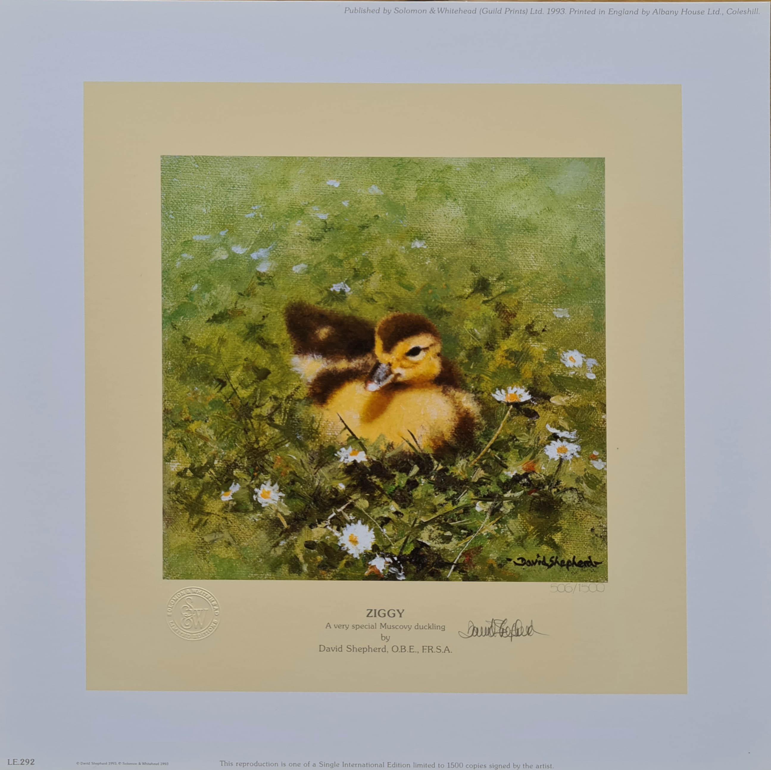 shepherd ziggy, duckling print