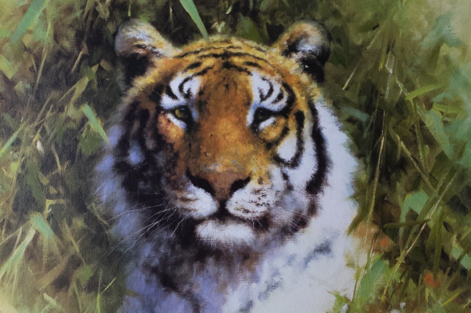 Signed, limited edition print, Portrait of a tiger